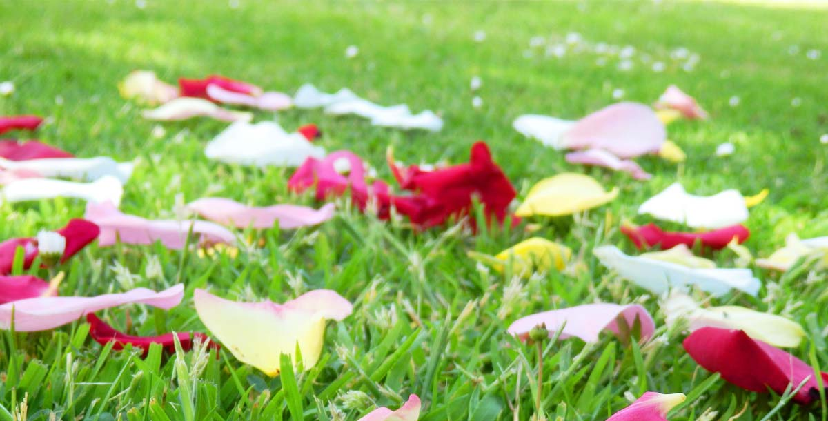 Florist für Brautstrauß, Hochzeits-Dekoration in Dresden